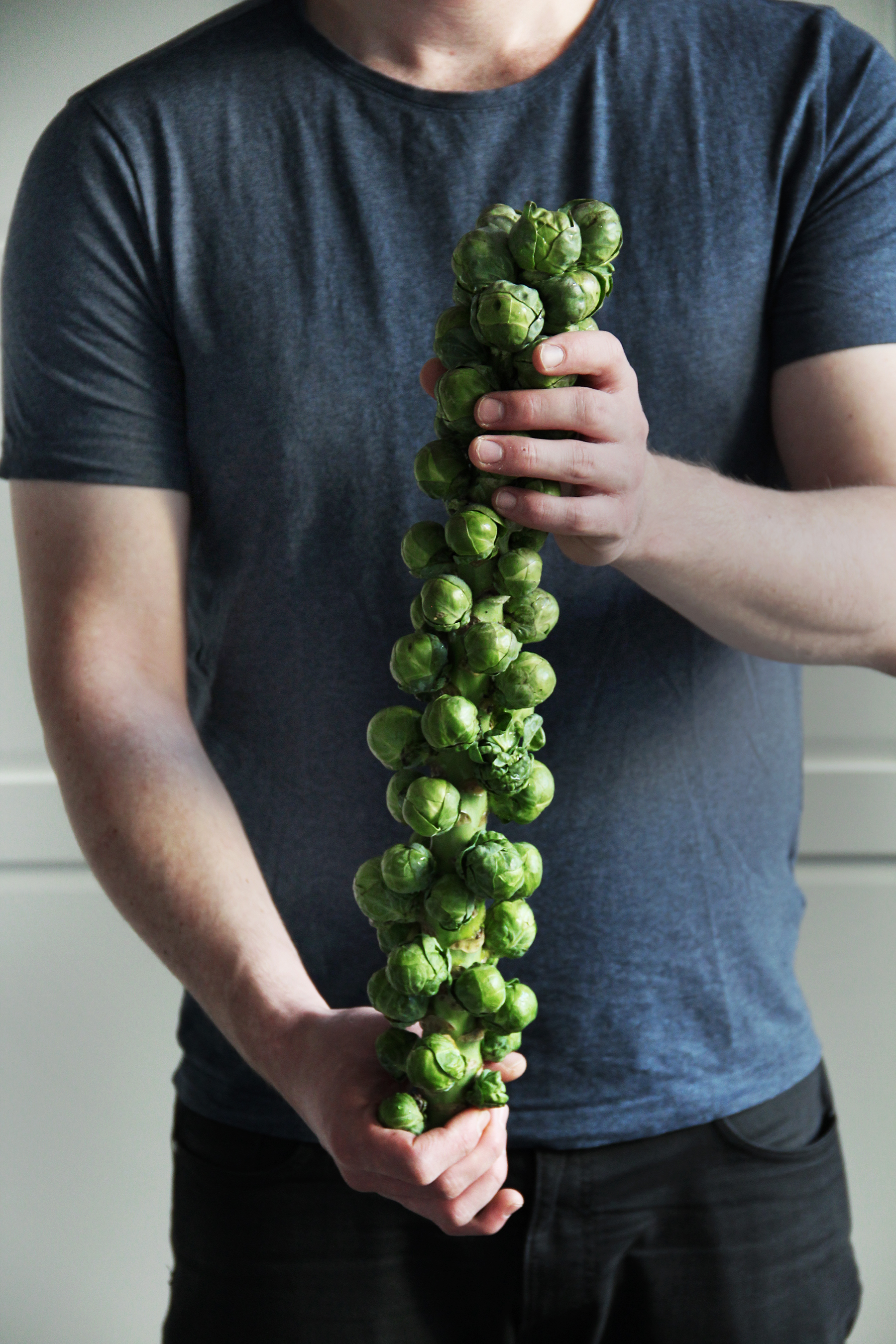 brussels sprouts on the stalk harvest